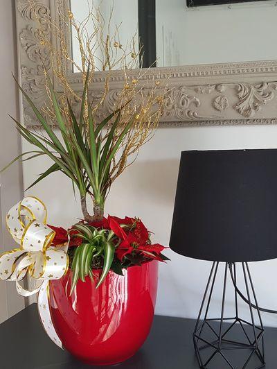 Associer le chlorophytum avec d'autres plantes d'intérieur: une idée originale pour un cadeau, les fêtes de fin d'année et après!