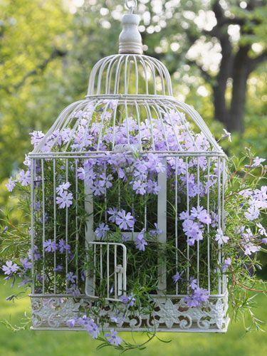 Cage-Fleurs-phlox-suspendus-pot
