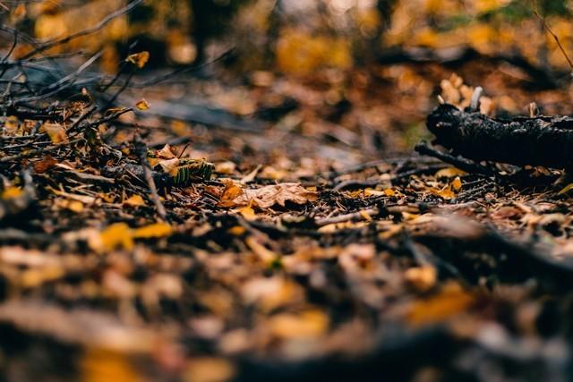feuilles mortes sol automne humus