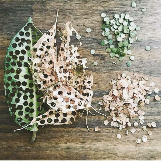 confettis originaux feuilles mortes