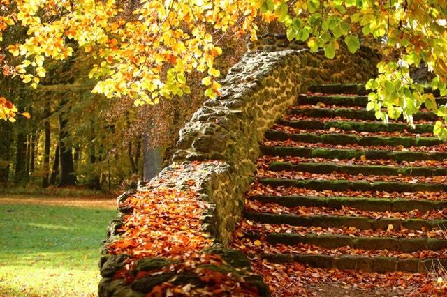 feuilles mortes escalier automne