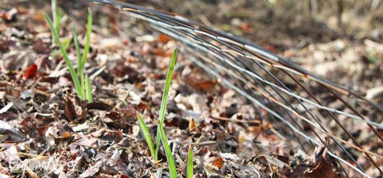 feuilles-mortes-paillage-potager