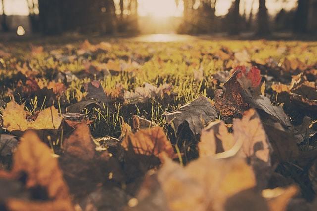 feuilles mortes jardin pelouse gazon automne lumiere