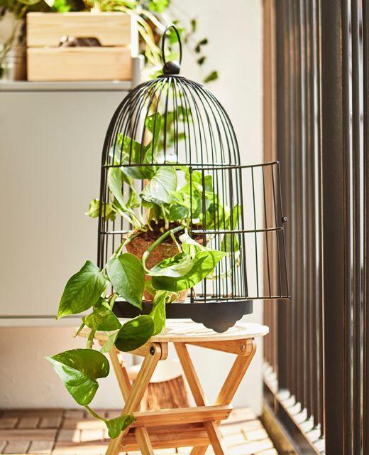 philodendron-plante-interieur-cage-oiseau