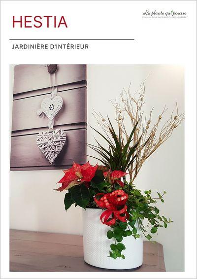 DIY idée de composition florale avec un poinsettia pour Noël et les fêtes de fin d'année, ou pour un cadeau personnalisé avec des plantes, fait maison