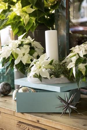 poinsettia blanc fleur coupée pot déco noël