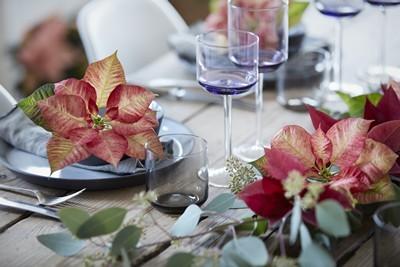 poinsettia diner romantique