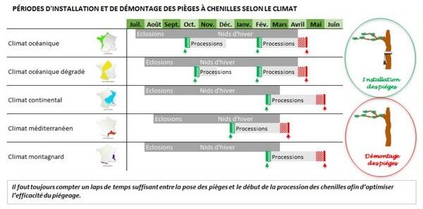 Les pièges à chenilles processionnaires du pin se posent à différentes saisons selon les régions de France. Lisez l'article du blog et découvrez 7 méthodes efficaces pour supprimer cet insecte.
