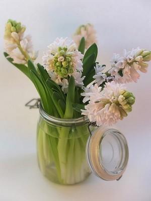 Profitez du parfum et des fleurs d'hiver des jacinthes dans votre maison! A travers un simple bouquet de jacinthes blanches dans un bocal par exemple. Toutes les astuces sur le blog pour les mettre en valeur et prolonger leur floraison. Bonne lecture :)