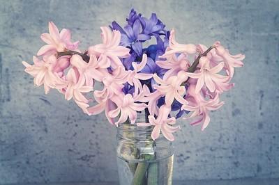 DIY - 5 façons de profiter des fleurs de jacinthe à l'intérieur. Ici, un bouquet de jacinthes roses et bleues dans un vase en verre. Rdv sur le blog pour en savoir plus :)