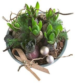 Bien choisir ses bulbes pour une floraison réussie à l'intérieur pour les fêtes de Noël et de fin d'année. Composition de bulbes de jacinthes de Noël. Plus d'infos sur l'article du blog.
