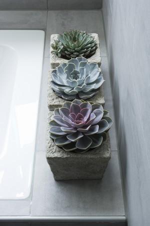 echeverias dans des pots en béton dans une salle de bain sur le rebord d'une baignoire