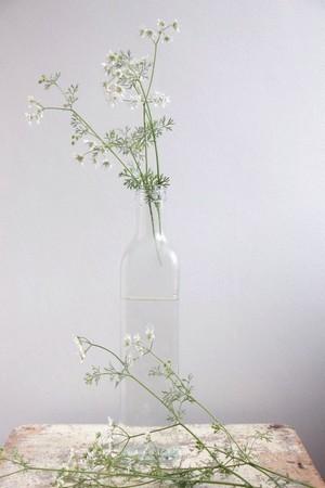 Fleurs d'apiacees ou ombellifères dans une bouteille en verre transparent