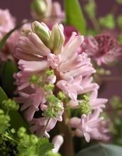 DIY: 5 idées simples pour des fleurs de jacinthes à l'intérieur: hydroponie, galets, terrarium, pot et bouquets. Découvrez comment choisir les bons bulbes et les comment les forcer pour une floraison à l'intérieur. Ici une superbe fleur de jacinthe rose tendre en intérieur. Lisez l'article sur le blog pour une déco réussie :)