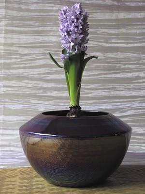 Découvrez toutes les astuces pour faire fleurir les jacinthes à l'intérieur (ici une jacinthe mauve dans un pot aux tons mauve). Lisez l'article sur le blog pour découvrir comment forcer les jacinthes facilement pour une floraison réussie!