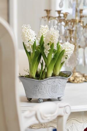 Faites pousser des fleurs de jacinthes dans votre maison et profitez de leurs couleurs et de leur parfum! Ici des jacinthes blanches poussent à l'intérieur dans une baignoire décorative. Lisez l'article pour toutes les astuces pour réussir et DIY !