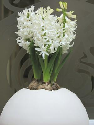 DIY - Plantez des jacinthes en pot pour une floraison à l'intérieur. Pour plus d'harmonie, accordez la couleur des jacinthes à celle du pot. Ici, des jacinthes blanches dans un pot blanc épuré en forme d'oeuf. Lisez l'article sur le blog pour en savoir plus