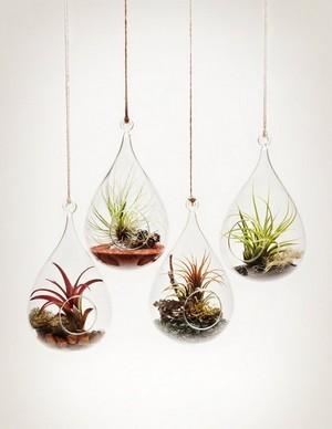 Tillandsias suspendus dans des boules de verre terrarium
