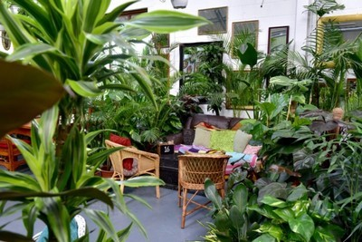 Urban jungle style - intérieur style jungle urbaine
