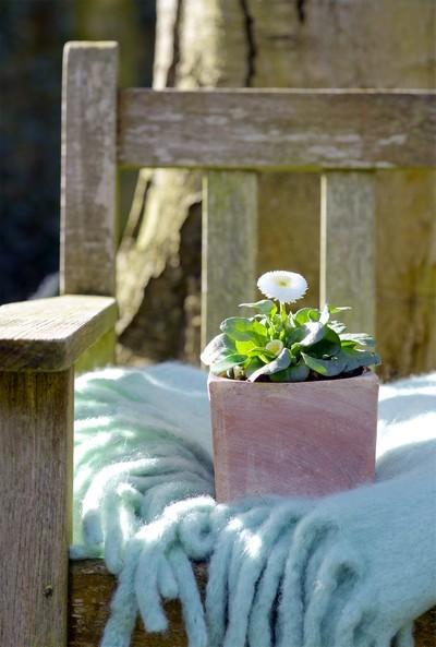 11 idées de plantes à offrir comme cadeau de Saint-Valentin
