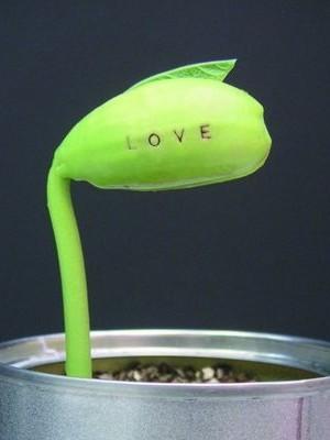 Idée de cadeau originale pour la Saint-Valentin: une graine de haricot magique avec un message gravé.