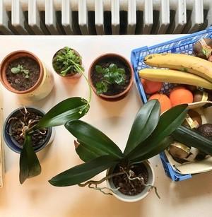 Découvrez les plantes vertes increvables de Cécile: kalanchoé, crassula, orchidées... Cécile est une maman qui aime les plantes résistantes qui lui survivent. Lisez son témoignage!
