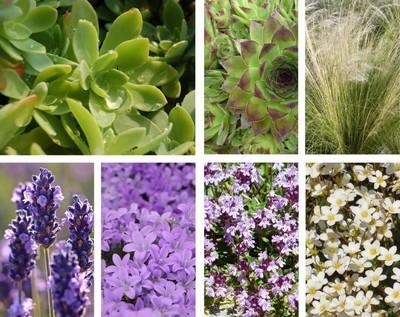 Sedum palmeri: découvrez des idées d'association avec des plantes pour l'extérieur au jardin. Lisez l'article sur le blog.