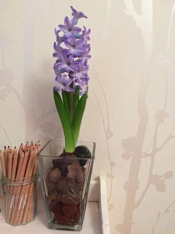 Décoration avec une jacinthe bleue violette dans un vase transparent contenant de la pouzzolane, à côté d'un pot de crayons de couleur