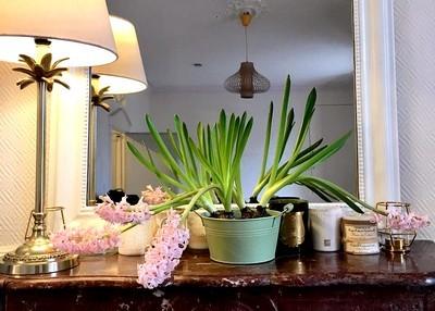 Cécile, une maman qui aime les belles plantes faciles à cultiver! Ici une coupe de jacinthes roses sur une cheminée devant un miroir... Découvrez ses astuces de jardinage facile dans son interview.