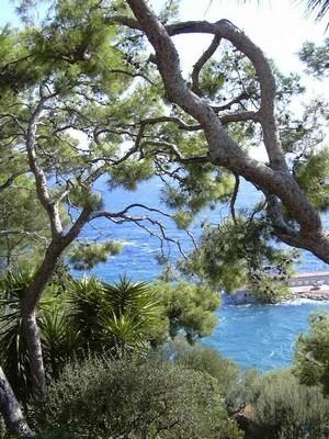 Le jardin rêvé de Cécile: des pins sur fond de mer bleue, c'est la Côte d'Azur... Lisez son interview!