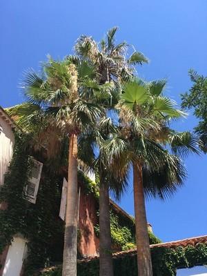 Le jardin rêvé de Cécile: des palmiers devant une maison provençale sur fond de ciel bleu... Lisez son interview