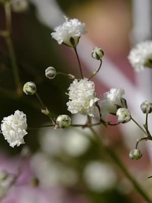 Gypsophiles: des fleurs idéales pour une décoration de table, y compris à Pâques! DIY sur le blog. Cliquez pour en savoir plus