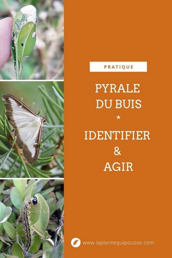 Identifier la pyrale du buis précocement permet d'agir plus efficacement sur son cycle de reproduction. Lisez l'article sur le blog pour en savoir plus.
