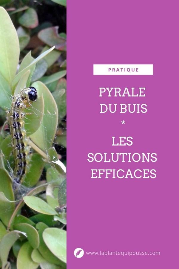 Tous les traitements naturels bio et solutions contre la pyrale du buis (Cydalima perspectalis). Lisez l'article sur le blog.