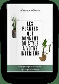 Sélection de plantes design qui donnent du style à votre intérieur, avec le pot idéal pour chaque style. Téléchargez l'E-book gratuit La Plante Qui Pousse