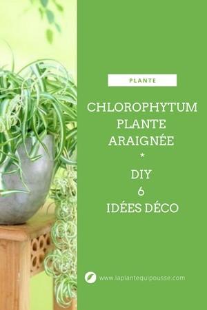 Chlorophytum ou plante araignée: 6 idées déco pour mettre en valeur cette plante d'intérieur facile à cultiver: rdv sur le blog pour lire l'article