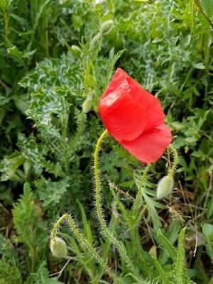 Fleurs comestibles: découvrez 9 fleurs qui se mangent au jardin. En savoir plus sur l'article du blog