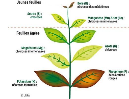 Bien identifier les symptômes de carences des plantes permet d'apporter le bon engrais. Lisez l'article pour en savoir plus!