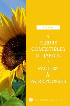 Liste détaillée de 9 fleurs comestibles du jardin, faciles à faire pousser pour des recettes colorées. Lisez l'article pour en savoir plus!