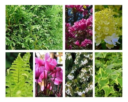 Que planter sous une haie de conifères, thuyas, cyprès...? Liste des plantes et astuces sur l'article du blog.