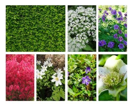 Que planter au pied d'une haie de feuillus? Idées, liste de plantes et astuces sur l'article du blog.