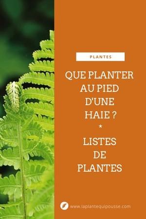 Que planter sous une haie? Idées de fleurs, plantes, arbustes à planter au pied d'une haie de conifères ou feuillus. Lisez l'article du blog!