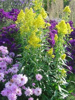 Les vivaces fleurissent à profusion dans le style des jardins anglais. En savoir plus sur ce type de jardin: lisez l'article du blog.