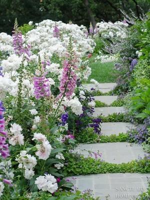 Quelles fleurs vivaces pour un jardin anglais? Lisez l'article sur le blog.