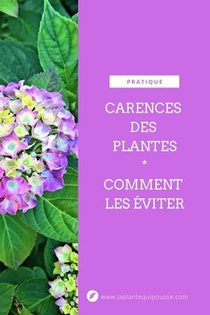 Eviter les carences et chloroses des plantes: découvrez pourquoi vos plantes ont des carences et comment les résoudres. Ex des Hortensias. Lisez l'article sur le blog.