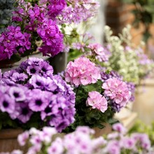 Bien choisir ses engrais pour ses plantes, comprendre le NPK, éviter les carences des plantes: lisez l'article sur le blog.