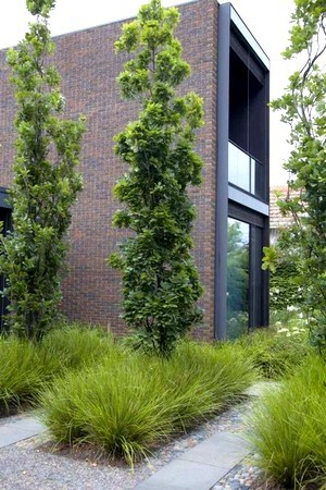Quelles plantes choisir pour un jardin minimaliste moderne? Lisez l'article pour en savoir plus!