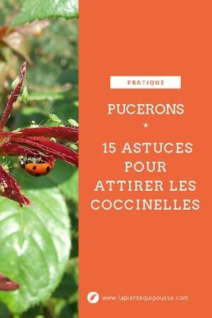 Lutter contre les pucerons au naturel: 15 astuces pour attirer les coccinelles. CLiquez pour télécharger gratuitement le guide de 40 pages!
