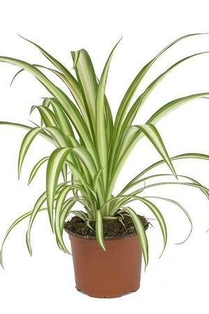 Si vos plantes d'intérieur sont moches... alors téléchargez le guide: Les plantes design qui donnent du style à votre intérieur!