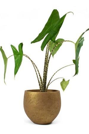 Donnez du style à votre intérieur avec une sélection de plantes design: téléchargez le guide!